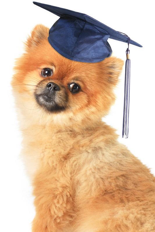 Professional Dog Training Malaysia