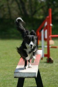 Dog Agility Soorts